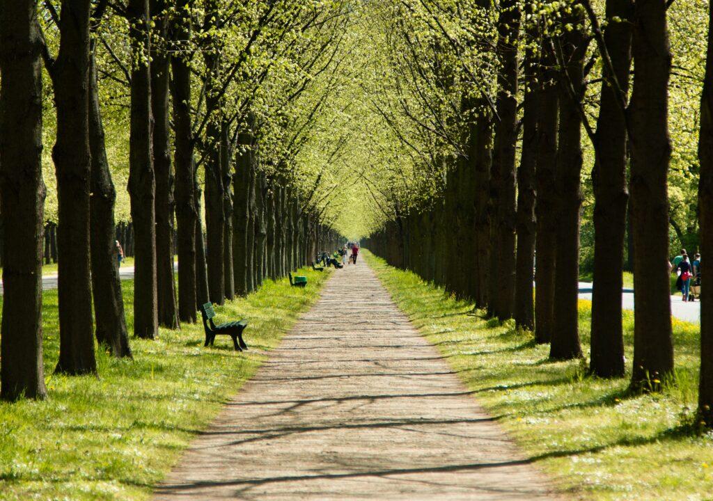 Kuvituskuva, jossa puita tien molemmilla puolilla