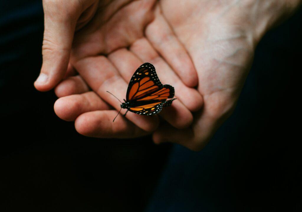 Kuvituskuva, jossa kädet ja perhonen