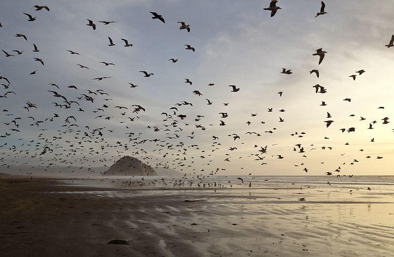 artikkelikuvassa merenrantaa ja lentäviä lokkeja