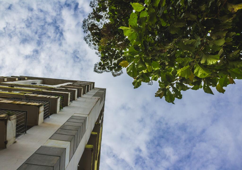 Kuvituskuva, jossa rakennus ja puu alhaalta ylöspäin kuvattuna